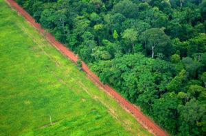2002 yılından bu yana yağmur ormanlarının yüzde 34'ü yok oldu
