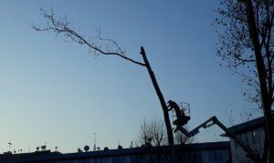 Greenwashing: il sindaco di Milano Giuseppe Sala si candida con i Verdi Europei