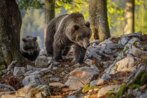"""Stop Casteller, Marco Reggio: """"Non basta rinunciare al privilegio di specie"""" – Parte II"""