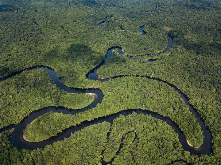In difesa delle nostre foreste