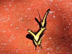Danza de mariposas