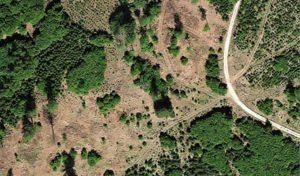 """""""Land ohne Wald – Wehrt Euch!"""": Eine Streitschrift gegen die Vernichtung unserer Wälder"""
