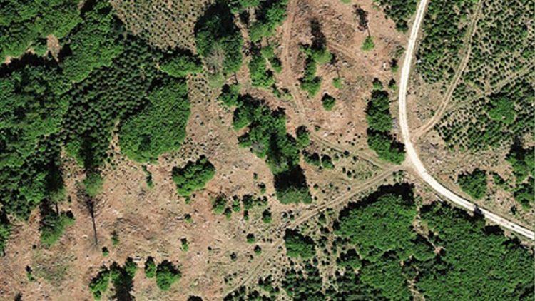 """""""Land ohne Wald - Wehrt Euch!"""": Eine Streitschrift gegen die Vernichtung unserer Wälder"""