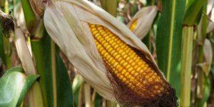 Agrarwende kann die Selbstversorgung sogar erhöhen