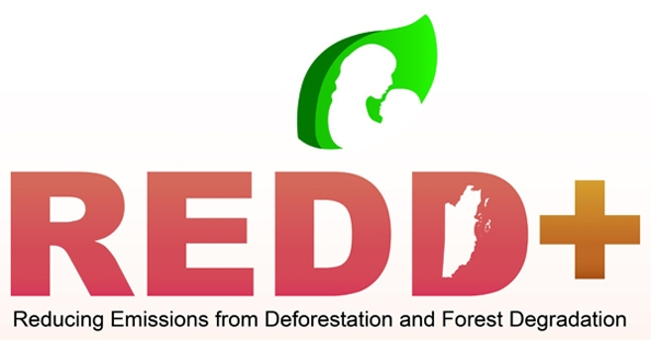 Report di Re:Common e Greenpeace su protezione delle foreste di ENI e greenwashing