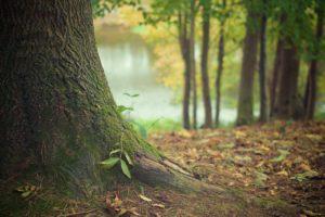 Homage to Prof. Lewis Warsh (Part 2): Men as Trees Cedar and Wood