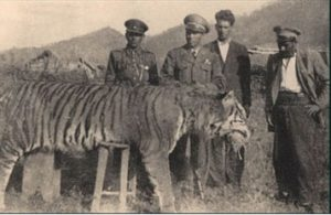 Love for Living Animals: Can the Extinct Caspian Tiger be Brought Back to Life?