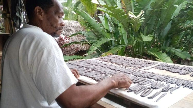 La vainilla: un producto con el que Colombia florecería