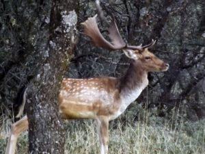 El Corredor Biológico Mundial se extiende a muchos rincones de España y de nuestro planeta