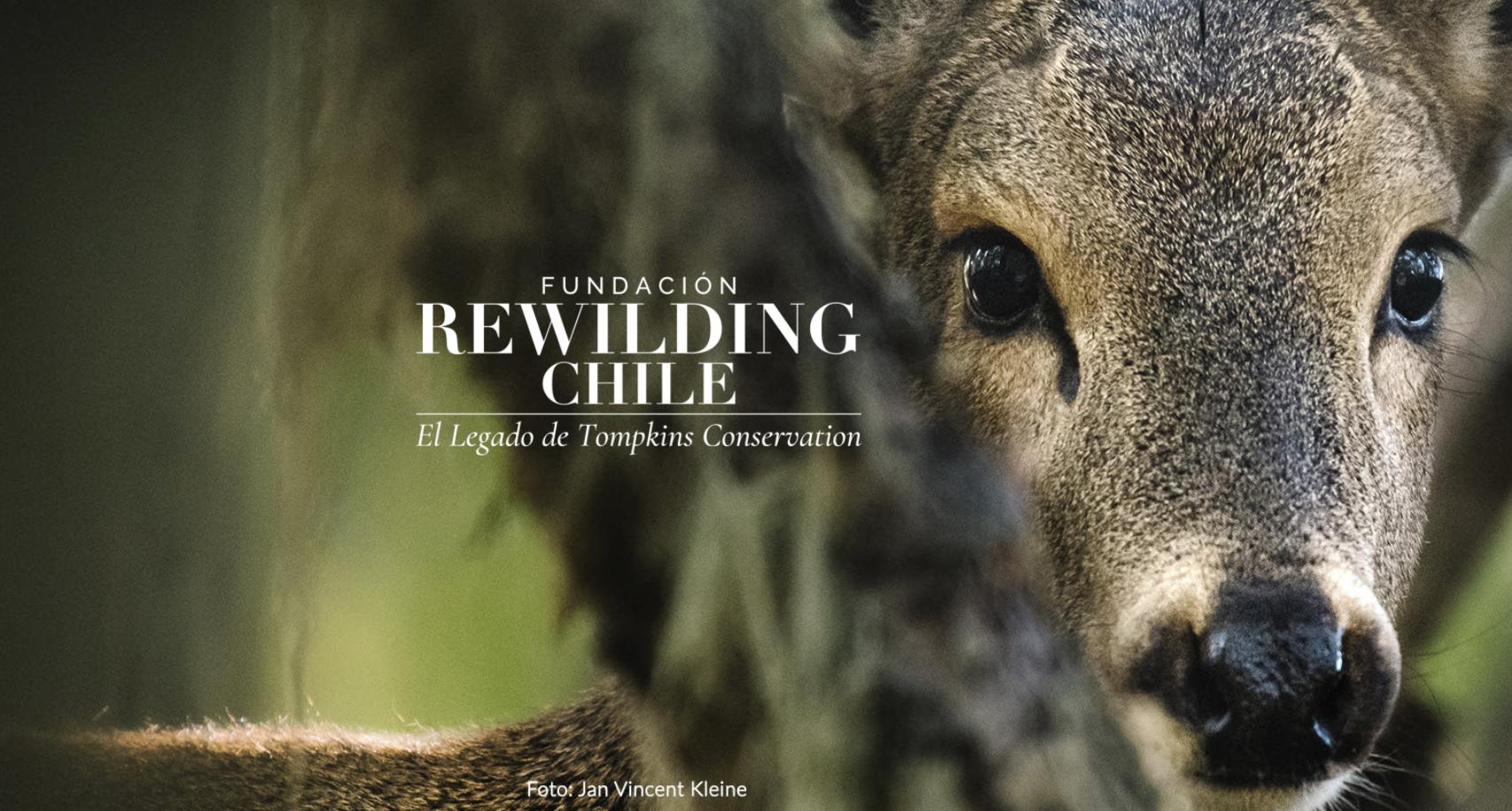 Rewilding Chile