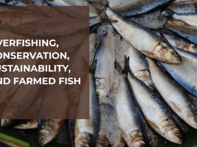 overfishingheader-04-min-2048x1366