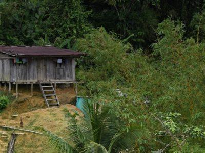 Colombia; despojo invisible de una selva chocoana