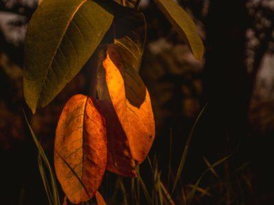 leaves-5477181_1280