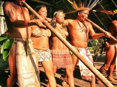 Tukanos from Amazon rainforest
